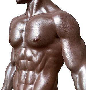 Abbildung: Muskulöser Oberkörper